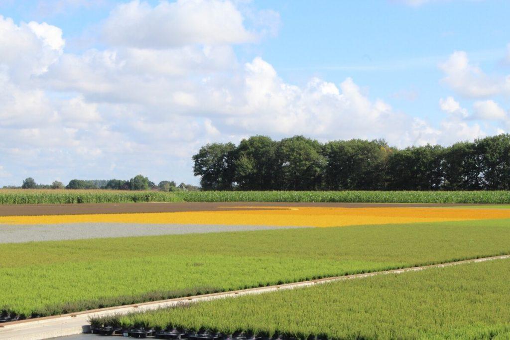 Landwirtschaft am Niederrhein